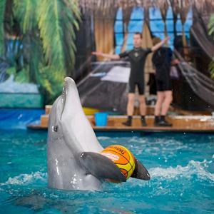 Дельфинарии, океанариумы Славянска-на-Кубани